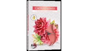 Vonná čajová svíčka Kaktusový květ 6 ks v krabičce