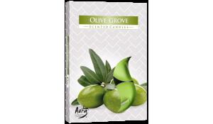 Vonná čajová svíčka Olivový háj 6 ks v krabičce