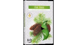 Vonná čajová svíčka Jedle Fir tree 6 ks v krabičce